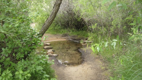 Boise Foothills Loop Hike Gulch, Watchman, Three Bears 2