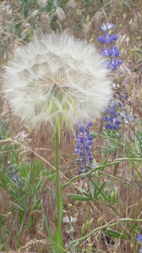 Boise Foothills Loop Hike Gulch, Watchman, Three Bears 8